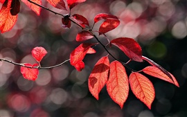 Preview wallpaper Autumn has come, and the leaves red
