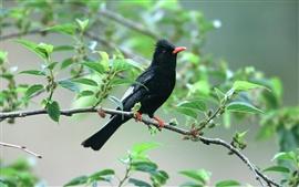 Pássaro preto no ramo de árvore
