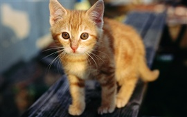 Preview wallpaper Cute orange kitten
