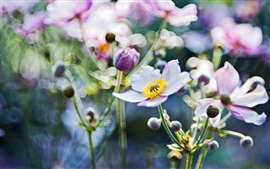 Фокус размытия цветов крупным планом