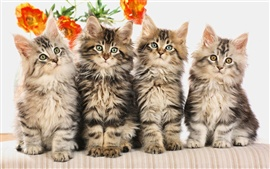 Preview wallpaper Four cute little cat