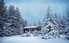 Preview wallpaper House in the winter forest