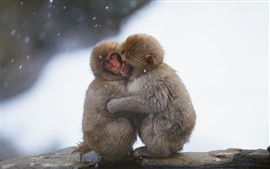 Preview wallpaper Monkeys embrace heating in the cold winter