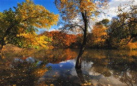 Preview wallpaper Nature autumn trees lake