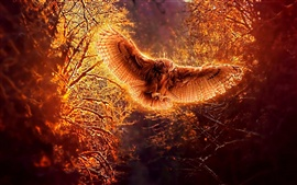 Preview wallpaper Owl in flight at night forest