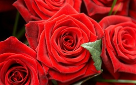 Preview wallpaper Romantic red roses