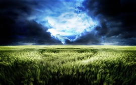 Preview wallpaper The dream world of endless wheat fields scenery
