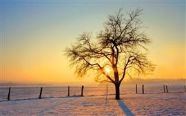 Beleza anoitecer árvore