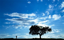 Tree silhouette under the blue sky