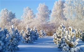 Preview wallpaper Winter snow pine