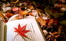 Preview wallpaper Autumn leaves Japanese book