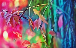 Preview wallpaper Autumn leaves fuzzy