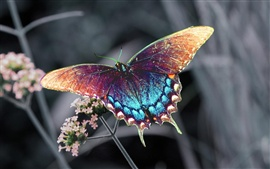 Preview wallpaper Beautiful colorful butterfly