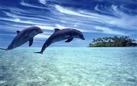Cheerful dolphins in the sea