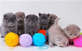 Cute kittens with ball of yarn