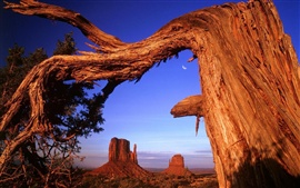 Desert rock dry tree in USA