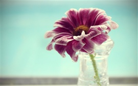 Preview wallpaper Flower petals vase macro