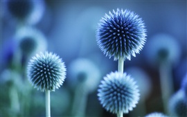 Preview wallpaper Flower plant blue mood