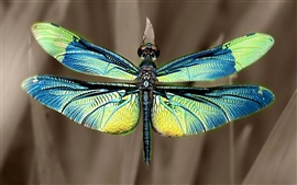 Preview wallpaper Iridescent dragonfly wings