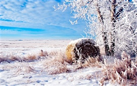 Preview wallpaper The snow of winter wheat fields