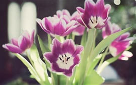 Preview wallpaper Tulip petals macro