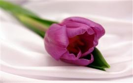 Un tulipán violeta