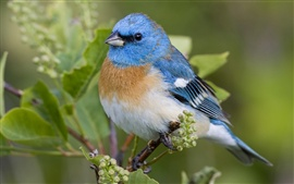 Preview wallpaper Beautiful blue bird