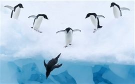 Preview wallpaper Penguins ice snow water