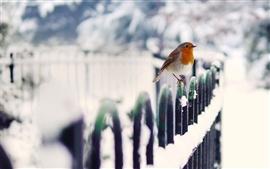 Preview wallpaper Winter bird snow fence