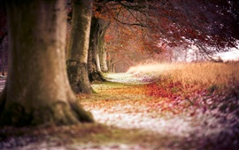 Preview wallpaper Autumn red maple forest