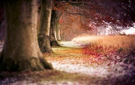미리보기 배경 화면 가을의 붉은 단풍나무 숲
