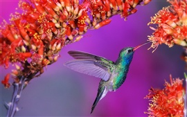 Preview wallpaper Beautiful birds hummingbird