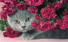 Preview wallpaper Cat and flowers