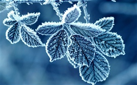 Cold winter morning, frost leaves
