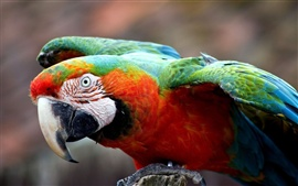 Preview wallpaper Colorful parrot close-up