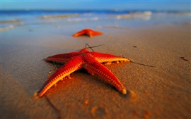 Preview wallpaper Evening beach starfish close-up