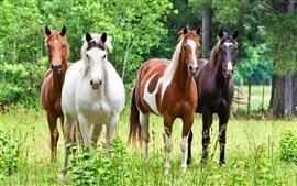 Quatro cavalo na grama