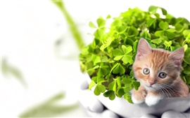 Preview wallpaper Green bonsai and cat