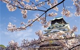 Templo paisagem de flores da primavera