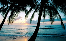 Preview wallpaper Ocean sunset palm trees