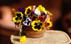 Preview wallpaper Pansy flowers and calendula