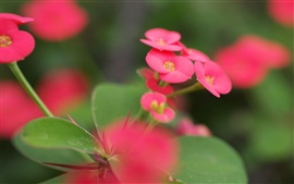 Preview wallpaper Pink flowers green leaves blur macro