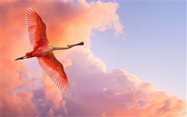 Red feather bird flying in the sky