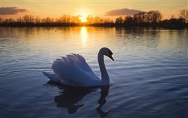 O Lago dos Cisnes ao entardecer