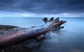 Preview wallpaper Tree roots fog rocks sea