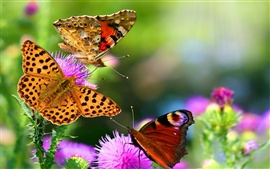 Preview wallpaper Beautiful insects, butterflies