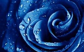 壁紙のプレビュー 青い花のマクロのバラ
