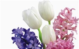 壁紙のプレビュー 点在するチューリップの花束