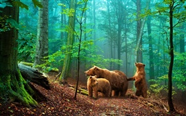 Preview wallpaper Brown bears in the forest