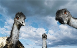 Preview wallpaper Curious ostrich